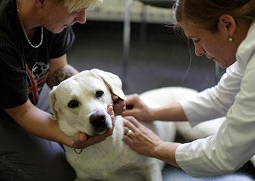 Hund in Behandlung